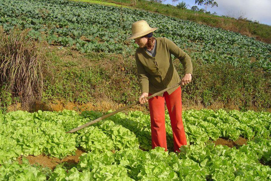Resultado de imagem para Agricultura familiar é a base da economia de 90% dos municípios brasileiros com até 20 mil habitantes