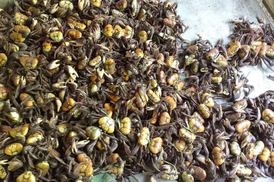 Polícia apreende mais de 500 caranguejos em feiras livres da Região Metropolitana