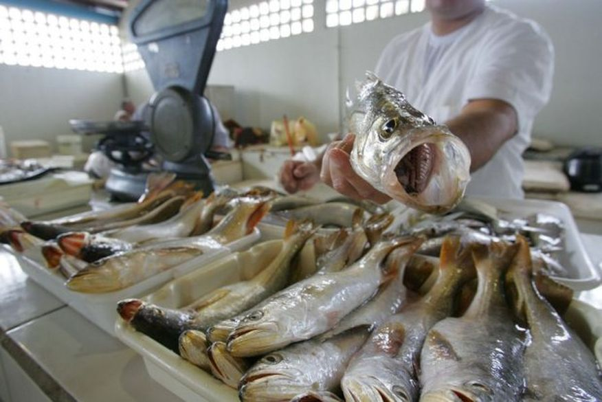 Resultado de imagem para vendedor peixes